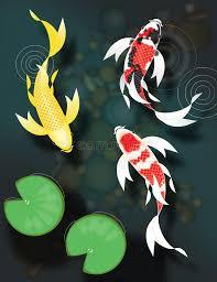 butterfly koi swimming in pond stock illustration illustration of