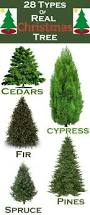 christmas real christmas trees for sale weavers hardware at