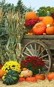 fall pumpkin wallpaper autumn garden harvest flowers pumpkins mums fall decorating