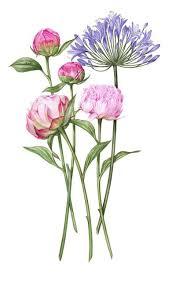 the 25 best flower illustrations ideas on pinterest watercolor