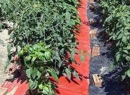 Mulching Vegetable Garden by Grow Vegetables In The Shade It U0027s Possible George Weigel