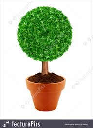 small green tree picture