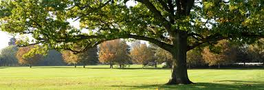 town and country tree care in bridport we are experienced in tree