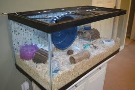 Hamster Cages Cheap Moving Water In A Hamster Cage Supplies U0026 Accessories Hamster