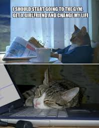 Newspaper Cat Meme - newspaper cat meme cat best of the funny meme