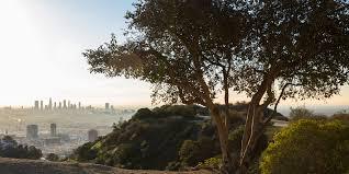 top 22 benefits of trees treepeople