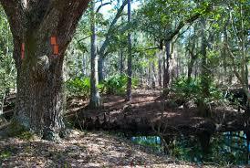walt disney world florida hikes