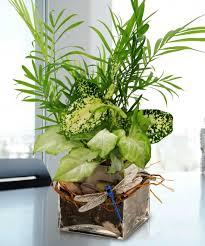 100 best office desk plants home office ts for an desk