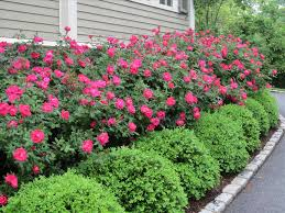 Low Budget Backyard Landscaping Ideas by Landscaping Articlespagemachinecom
