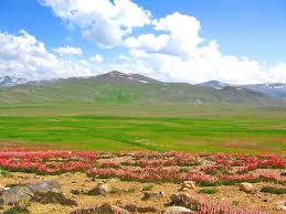 native plants of pakistan top 15 places to visit in pakistan pakistan insider