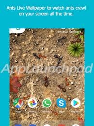 ants in phone apk ant in phone prank apk apkname