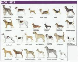 Types Of Dogs Nationstates Dispatch Hound Breeds Of Dogs