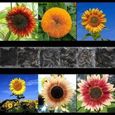 58 best seeds for the garden images on pinterest garden seeds