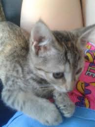 and new edition to the family cats amino