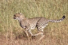 african safari animals best of east africa safari africa easy