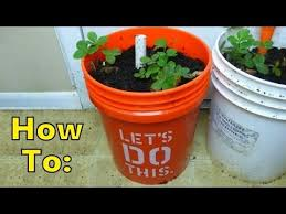 How To Make A Self Watering Planter by Updated Easiest How To Make Self Watering Sip Planter With 5