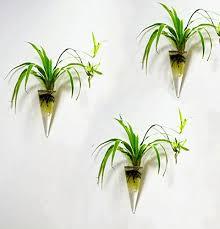 mkono 2 pack wall hanging plant terrarium glass planter cone