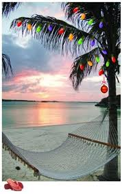 palm trees christmas lights and warm breezes outdoor adventures