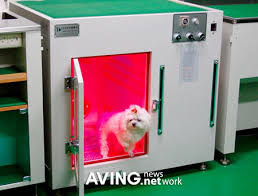 dog cremation after infrared pet drying room now the pet cremation machine