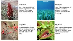 Tropical Rainforest Plant Species List - organisms u0027 adaptations texas gateway