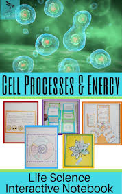 best 25 structure of a cell ideas on pinterest structural