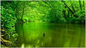 green nature wallpaper qygjxz