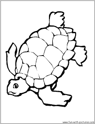 tortoise coloring page free coloring kids 5378