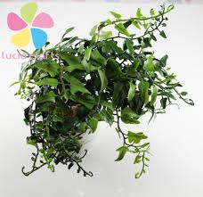 Fern Decor by Popular Fern Decor Buy Cheap Fern Decor Lots From China Fern Decor