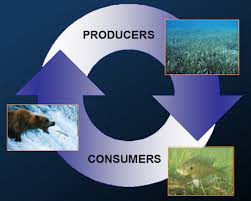 image of an eco-system representation, borrowed from t0.gstatic.com