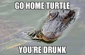 Crocodile Meme - lol some hump day humor for everyone s gator boys alligator