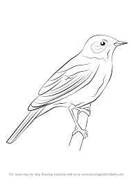learn draw nightingale birds step step drawing