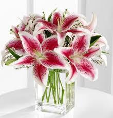 pink lilies pretty pink lilies kremp