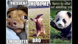 Funniest Animal Memes - funniest animal memes ever part 2 youtube