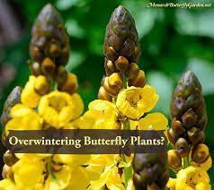 222 best butterfly garden plants images on pinterest butterfly