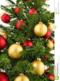 tree closeup stock photos image 34258743