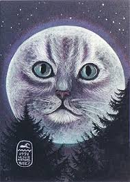 cats cosmic dolphins