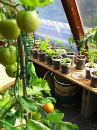 19 best indoor tomatoes images on pinterest tomatoes vegetable
