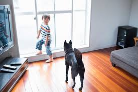 Is Laminate Flooring Good For Dogs The Most Durable Flooring You Can Install