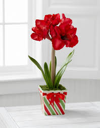 ftd inc webgifts program products seasonal winter christmas