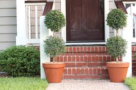 topiary trees how to plant a topiary tree in a terracotta planter southern patio