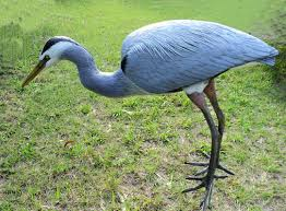 Heron Meaning by What Is The Difference Between A Blue Heron And Crane The Best
