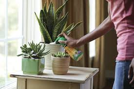 Amazon Succulents Amazon Com Miracle Gro Liquid Succulent Plant Food 8 Ounce