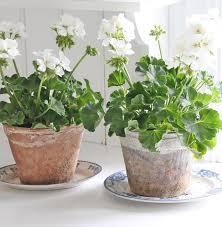 Best Fragrant Indoor Plants - aromatic plants top 10 indoor aromatic plants for your home