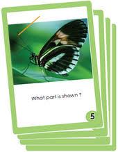 3rd grade science flash cards pdf printable sheets