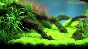 Planted Aquarium Aquascaping Aquascaping Aquarium Ideas From The Art Of The Planted Aquarium