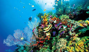 thanksgiving reefs great barrier reef facts worksheets ecology geology for kids