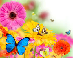 spring flowers and butterflies wallpapers picture u2022 dodskypict