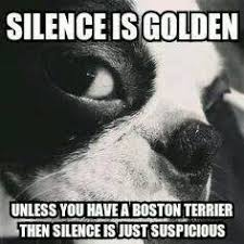 Boston Terrier Meme - boston terrier memes home facebook