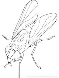 Coloriage Insecte à colorier  Dessin à imprimer  string art