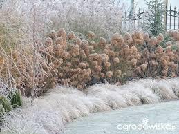 63 best winter garden images on winter garden gardens